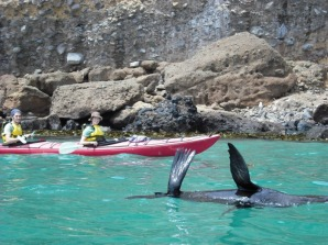 Eden Wildlife Cruises and Sea Kayaking Tours